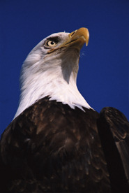 people-politico-noble-eagle